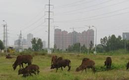 Hà Nội: Chậm giao đất dịch vụ cho người dân