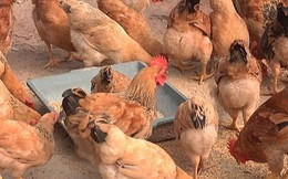 """Bộ Tài chính muốn """"cởi phí cho con gà"""""""