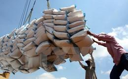 Hiệp hội Lương thực dự báo xuất khẩu gạo sẽ khả quan hơn từ quý 4