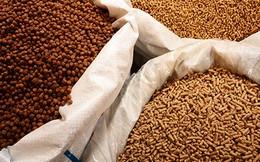 [Update thông tin Doanh nghiệp] Hòa Phát-HPG: Giải ngân 300 tỷ đồng cho chăn nuôi là một phép thử