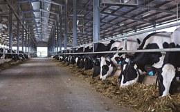 Vinamilk tăng mạnh thu mua sữa tươi nguyên liệu của nông dân