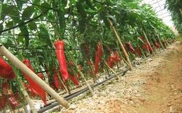 Vingroup đầu tư vào nông nghiệp tại Đồng Nai