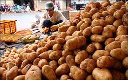 """Góc khuất sau việc """"phù phép"""" khoai tây Trung Quốc thành khoai Đà Lạt"""