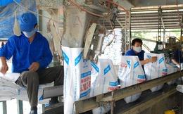 Hóa chất Lâm Thao chi 117 tỷ đồng tạm ứng cổ tức năm 2015 tỷ lệ 15%