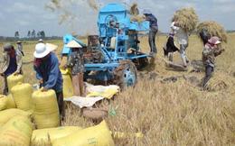 Việt Nam không thiếu gạo cho xuất khẩu
