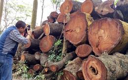 Thành ủyHà Nội yêu cầu làm rõ vụ thay thế 6.700 cây xanh