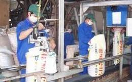 Triển khai dự án Nhà máy sản xuất phân bón supe phốt phát tại Nghệ An