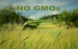 Scotland cấm hoàn toàn việc trồng nông sản biến đổi gen