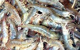Hàng hóa nổi bật tuần 13/04 – 19/04: Mỹ từ chối nhập khẩu nhiều lô tôm do nhiễm kháng sinh