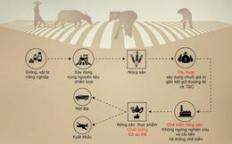 Thăm doanh nghiệp: Chuỗi giá trị nông nghiệp thông minh của TSC có những gì?