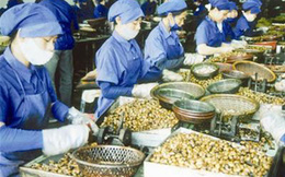 Giá trị xuất khẩu tiêu giảm nhẹ dù giá vẫn tăng