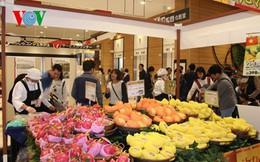 Xoài Cát Chu Việt Nam chính thức vào thị trường Nhật Bản