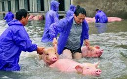 Trung Quốc thiệt hại 10 tỷ USD vì ngập lụt