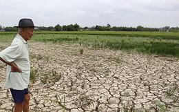 Cục trưởng Cục Trồng trọt: Hàng trăm ngàn hộ dân có thể bị đói do hạn, mặn