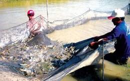 'Động trời' ở Tổng cục Thủy sản: 800 loại sản phẩm cấp khống đi đâu?