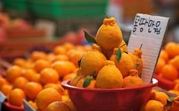 Kotra: Việt Nam là thị trường xuất khẩu chiến lược của Hàn Quốc