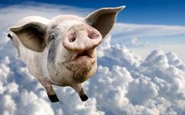 Con lợn đang làm khó nền kinh tế Trung Quốc