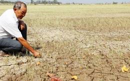 Xâm nhập mặn nghiêm trọng, nông dân không nên chỉ trồng lúa