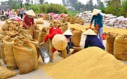 Không lo thiếu gạo xuất khẩu