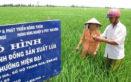 Xuất khẩu gạo khó về đích
