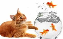 """Clip """"đánh giá con cá bằng khả năng leo cây"""" khiến nhiều người suy nghĩ về hệ thống giáo dục hiện nay"""