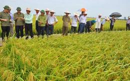 Công ty Giống cây trồng Trung Ương lãi 122 tỷ đồng 9 tháng đầu năm 2016