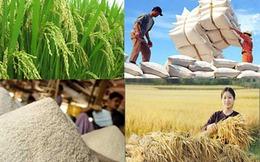 Tìm cách giữ thị trường cho gạo Việt