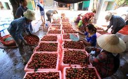 Nông sản Việt vẫn bị gây khó dễ!
