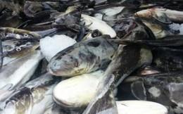 Vụ cá chết ở Lạch Bạng: Doanh nghiệp nói gì trước cáo buộc của dân?