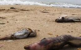 Bộ Y tế công bố kết quả 140 mẫu hải sản, nước lấy từ miền Trung