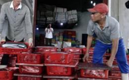 Quảng Bình: Ngư dân không tồn con cá nào