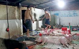 Nhiều cơ sở chăn nuôi ở Thanh Hóa dùng chất cấm