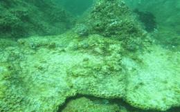 """Biển miền Trung hậu vụ cá chết: Biển sẽ """"ngộ độc mãn tính""""?"""