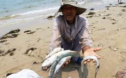 Đại biểu Trần Hoàng Ngân: Formosa có lý lịch không tốt, không thể để tiếp tục tàn phá môi trường
