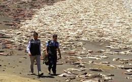 Khoảng 40 tấn cá hồi chết hàng loạt tại bờ biển Chile