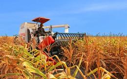 Sắp có chính sách đột phá thu hút đầu tư vào nông nghiệp?