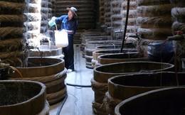 'Nước mắm có arsen': Sẽ đề nghị Bộ Công an vào cuộc