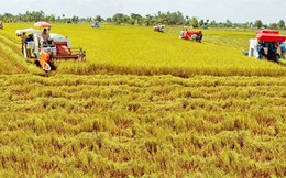 Vốn FDI vào nông nghiệp: Kêu gọi nhiều, đầu tư ít