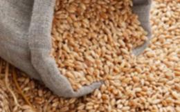 Tịch thu hơn 800 tấn lúa mì nhập lậu từ tàu Panama