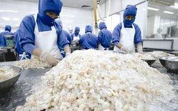 DOC tăng thuế chống bán phá giá tôm Việt Nam, DN thủy sản thêm rào cản?