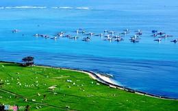 Lãi tiền tỷ mỗi năm nhờ nuôi trồng thủy sản ở đảo Lý Sơn