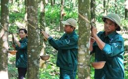 Sau Thủy sản, Cao su Quảng Nam tính chuyện rót vốn vào bất động sản