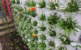 Những thiết kế vườn tường sáng tạo mà tuyệt đẹp cho ngôi nhà của bạn