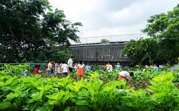 Vườn rau khổng lồ xanh mướt trên mái trường mầm non ở Đồng Nai