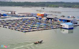 Vụ đem cá chết ra quốc lộ: Ngư dân phải bán đất trả nợ