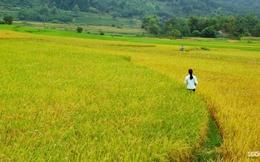 Thủ tướng đồng ý chuyển đổi hơn 1.477 ha đất trồng lúa sang đất phi nông nghiệp