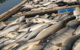 Bước đầu xác định nguyên nhân khiến cá chết trên sông Bưởi