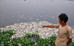 Cá chết hàng loạt, nguồn nước trên sông Cái Vừng ô nhiễm nghiêm trọng