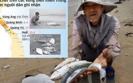 Bộ và các tỉnh họp về vụ cá chết ở bờ biển miền Trung