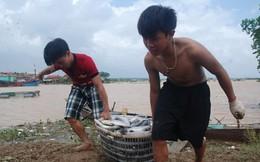 Hàng chục tấn cá lồng chết sau mưa lũ
